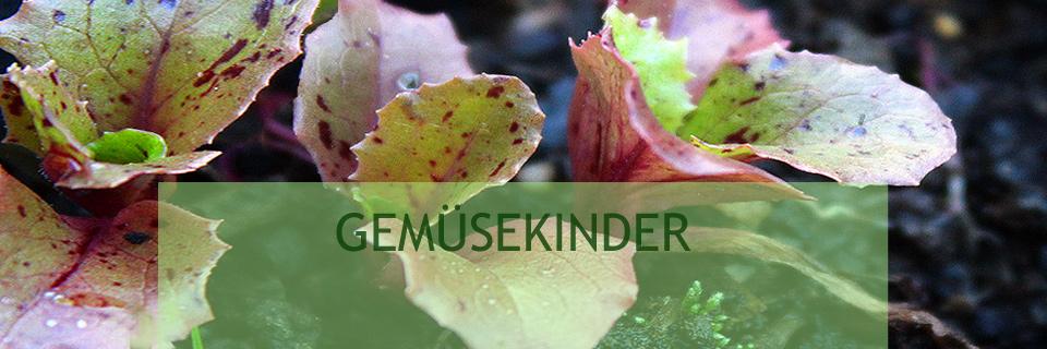 Wintergemüse | Garten Des Lebens Gemuse Im Garten Kohlblatter Tipps