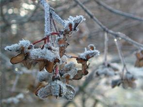 art_winter2